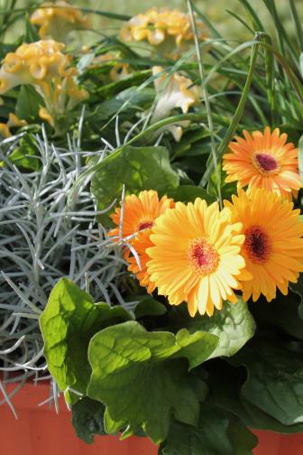 Sensommarplantering i gula toner