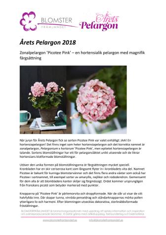 Årets Pelargon 2018