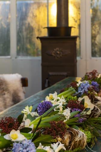 Svenskodlade hyacinter och julrosor med Karl Fredrik på EklaholmSvenskodlade hyacinter med Karl Fredrik på Eklaholm