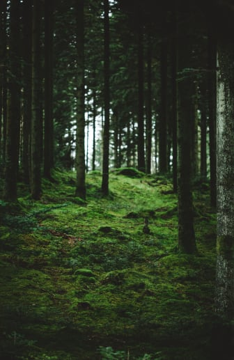 adayinhalland_skog