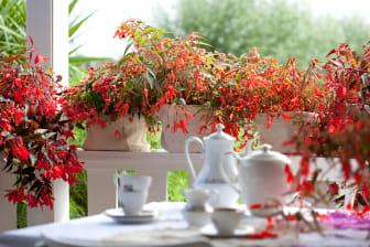 Hängbegonia på verandan