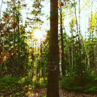 Foto_samin_ali_Ett träd som blir glad av solen_ Solljus är bra för träd och växter_minakvarter2019_specialpris