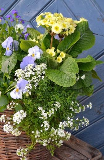 Vårplantering på trappen