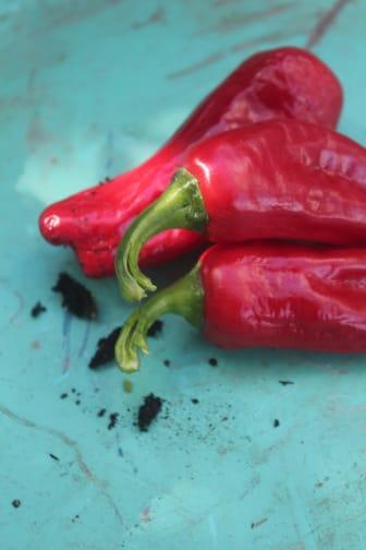 Chilifrukt