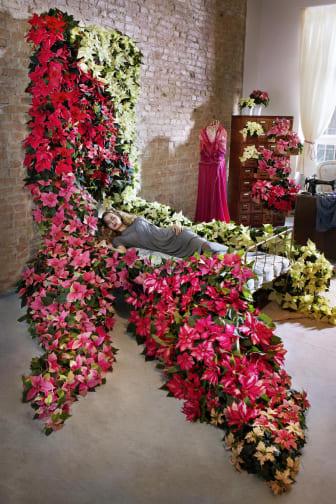 Törnrosas säng gjord av julstjärnor