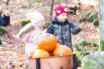 Under Höst i Djurparken är det barnens uppdrag att hitta alla skogstroll som gömmer sig runtom i parken
