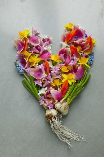 Hjärta av blommande vårlökar