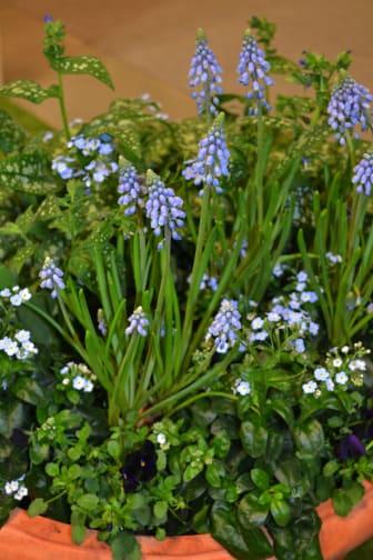 Vårplantering av Victoria Skoglund