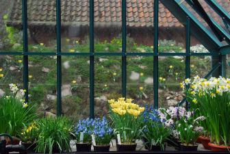 Lökväxter vår