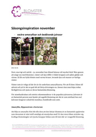 Säsongsinspiration november -vackra amaryllisar och bedårande julrosor