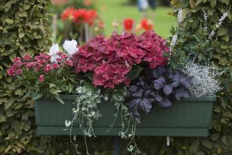Balkonglåda med blommor i rosa nyanser