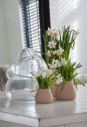 Vårens härliga blomsterlökar