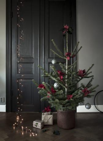 Julstjärnor Daniella Witte stil