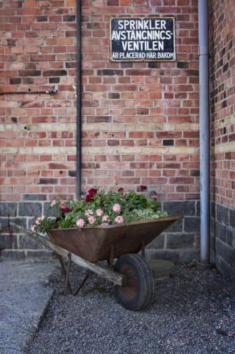 Sommarblommor Brooklyn Flowers i skottkärra