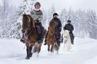 Horses of Taiga