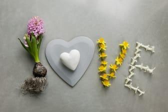 LOVE Vårlökar