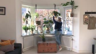 Skapa ett vackert fönster med krukväxter