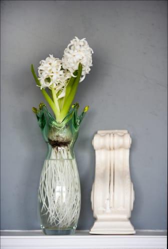 Hyacint i glasvas