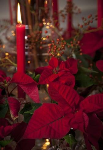 Röd vintagejul med julstjärnor 2