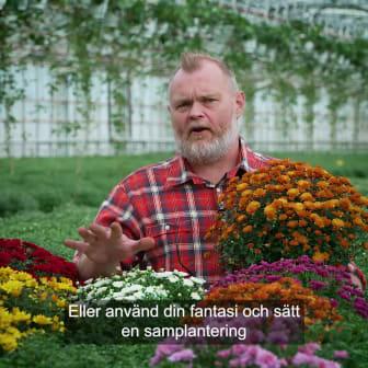 Trädgårdsmästaren tipsar 1 bollkryss 1x1.mp4