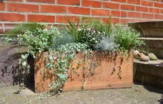 Prydnadsgräs och sommarblommor i sockerlåda