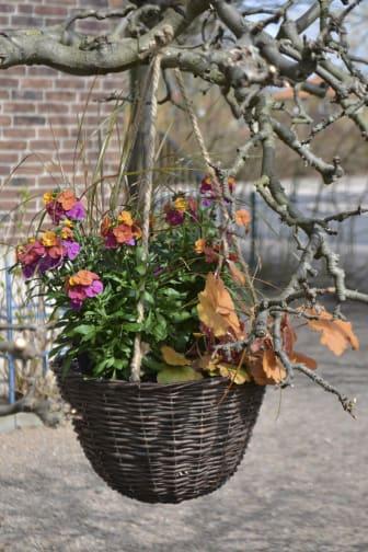 Ampel med vårens växter