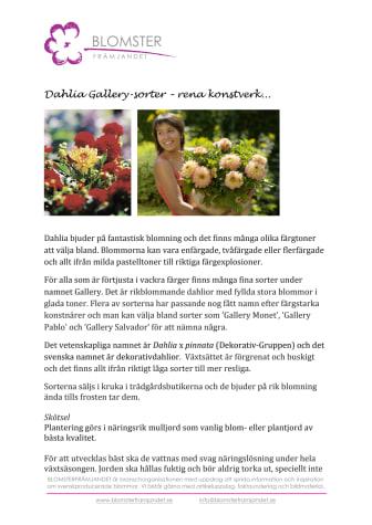 Dahlia Gallery-sorter – rena konstverk...