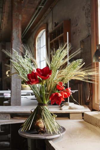 Julstämning med amaryllis