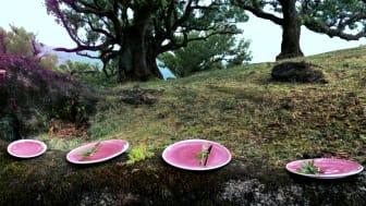 Rosenthal - Junto: Rose Quartz - Image Film