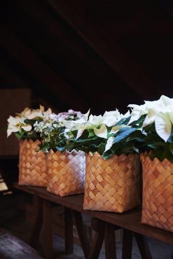 Julstämning med vita julstjärnor i näverkorgar