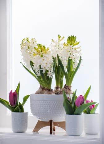 Vita hyacinter