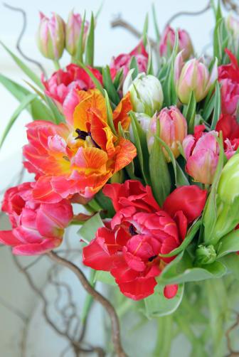 Tulpaner med sällskap