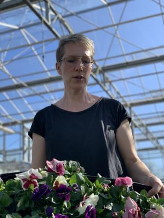 Jakobssons Handelsträdgård i Ödåkra