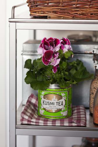 Engelsk pelargon, Pelargonium x domesticum, i teburk