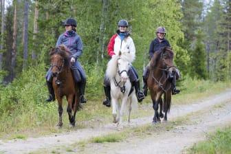 Horses of Taiga erbjuder upplevelser i skogarna kring Svansele.