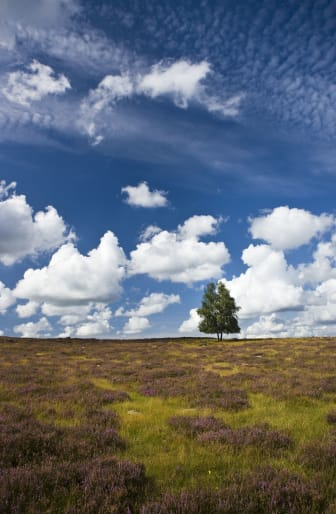 Landskap Mästocka träd 2_Foto Patrik Leonardsson