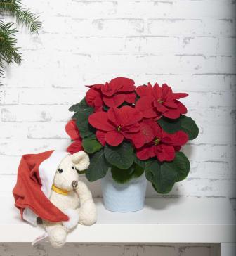 Nyhet - julstjärnan Christmas Mouse