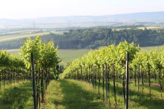 Schloss Bockfliess vinmarker