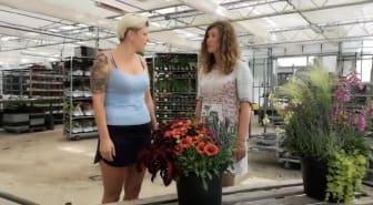 Trädgårdsmästare Neringa tipsar om hur du komponerar din höstkruka