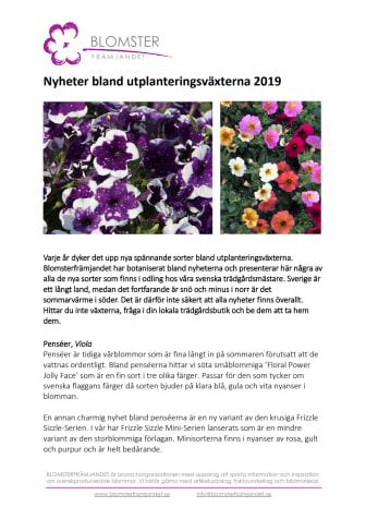Nyheter bland utplanteringsväxterna 2019