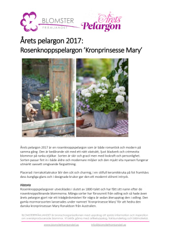 Årets Pelargon 2017:  Rosenknoppspelargon 'Kronprinsesse Mary'