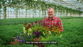 Trädgårdsmästaren_tipsar_höstblommor_16x9.mp4