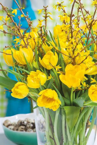 Gula tulpaner med forsythia till påsk