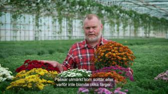 Trädgårdsmästaren tipsar 1 bollkryss 16x9.mp4