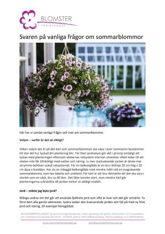 Svaren på vanliga frågor om sommarblommor