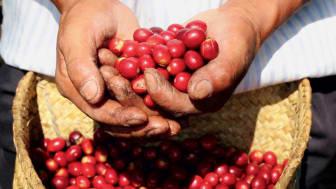 OriginalSizeJPEG-Miguels-hands_Kahlua-Coffee-For-Change