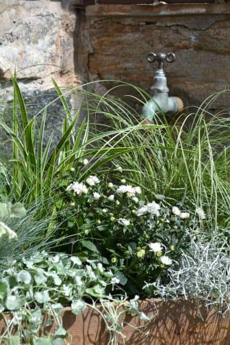 Mix av prydnadsgräs och sommarblommor