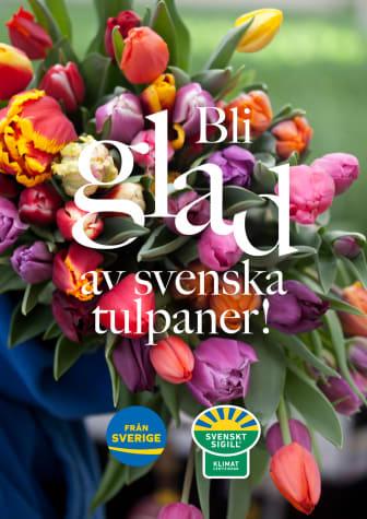 Bli glad av svenska tulpaner 2021 - A4 poster för egen utskrift