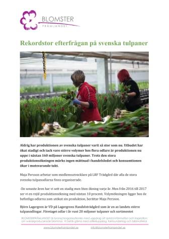 Rekordstor efterfrågan på svenska tulpaner