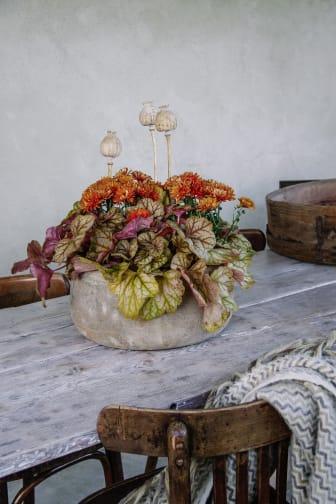 Alunrot och krysantemum